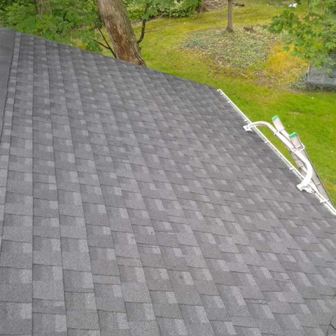 Roof Mold After