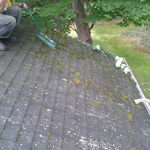 Roof Mold Before
